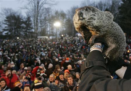 Punxsutawney Phil Groundhog